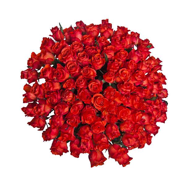 Roses picture id183378306?b=1&k=6&m=183378306&s=612x612&w=0&h=ywigmnqe4uenl mrli537u qsmiqrcmymc3bulu6qz0=