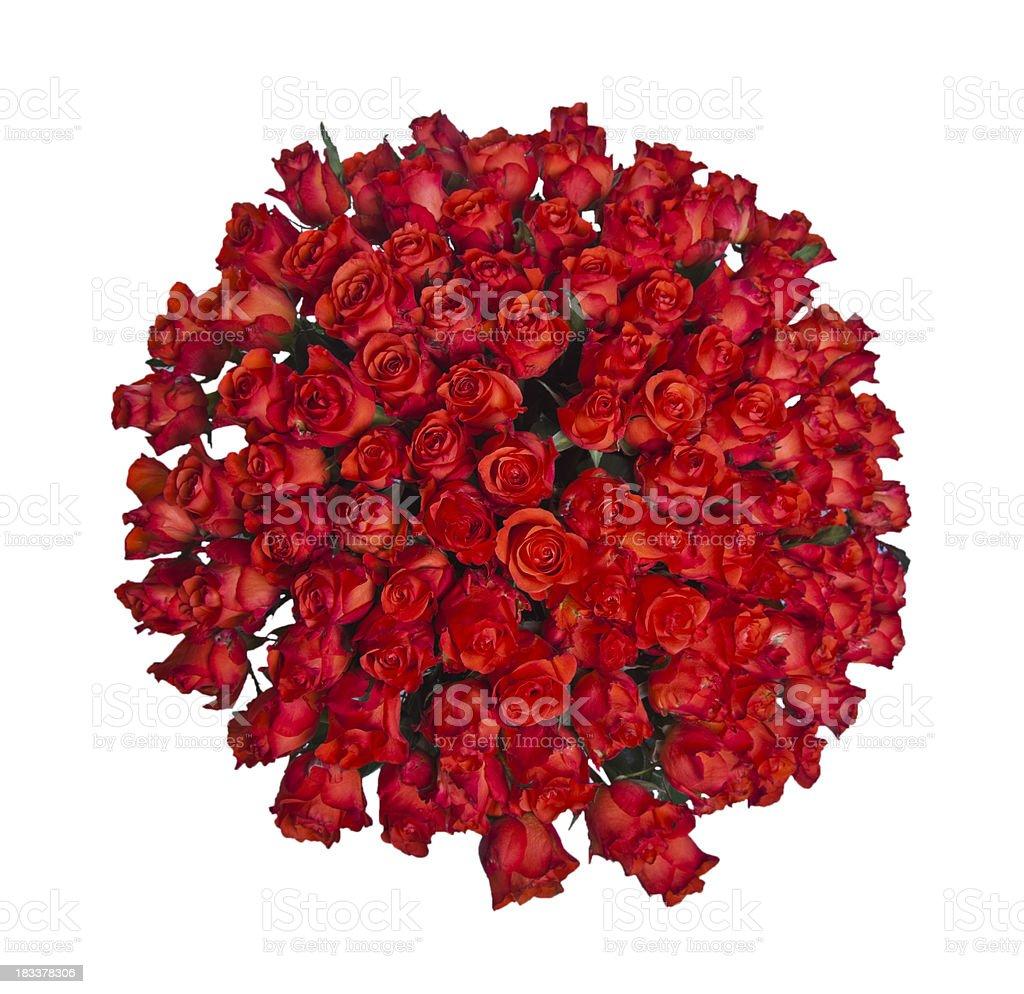 roses - Photo