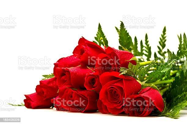 Roses picture id183405026?b=1&k=6&m=183405026&s=612x612&h=4ef8mug66sstfjltru8irsulvgblcf0kzqvvkmfcz5g=