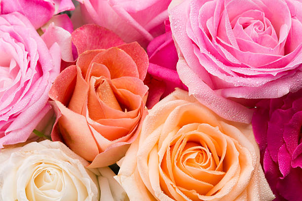 Roses picture id528442693?b=1&k=6&m=528442693&s=612x612&w=0&h=6bfulact3zhrw1vvqdqqwgp1vm4fpyaimj8qm5odwua=