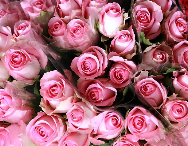 Roses picture id532816959?b=1&k=6&m=532816959&s=612x612&w=0&h=un5wo8ax2f0gfxhmdqmiqcyxiotbo2nhzwhjvkj0d5k=