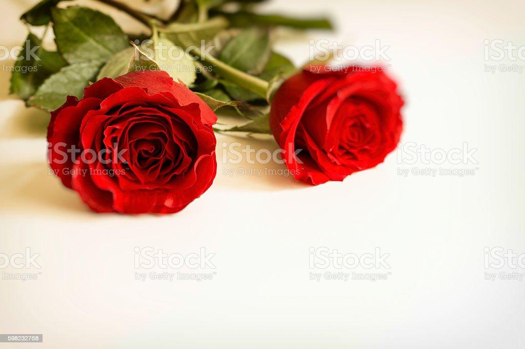 Rosas  foto royalty-free