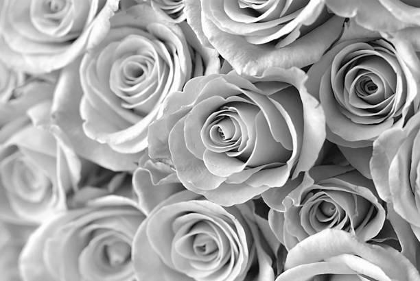 Roses picture id92029600?b=1&k=6&m=92029600&s=612x612&w=0&h=fht7jzuw3qwbnvyfnstcgmai70eiy3j5ibj 8kgbc8m=