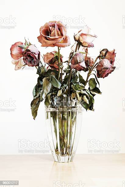 Roses picture id96001217?b=1&k=6&m=96001217&s=612x612&h=jggjj upqwwmcbbp4ewhbdnlahjshce3cpjeqpuwveu=