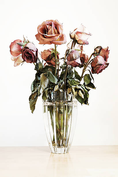 Roses picture id96001217?b=1&k=6&m=96001217&s=612x612&w=0&h=qdokuxncldebim39xejaxzmxvzpez8gda0ojwbs5 na=
