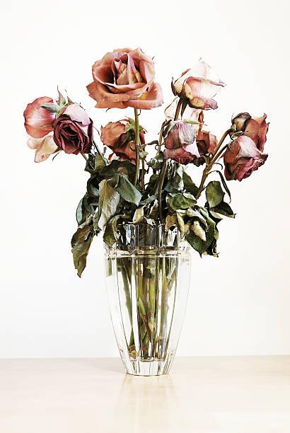 rosas - planta morta imagens e fotografias de stock