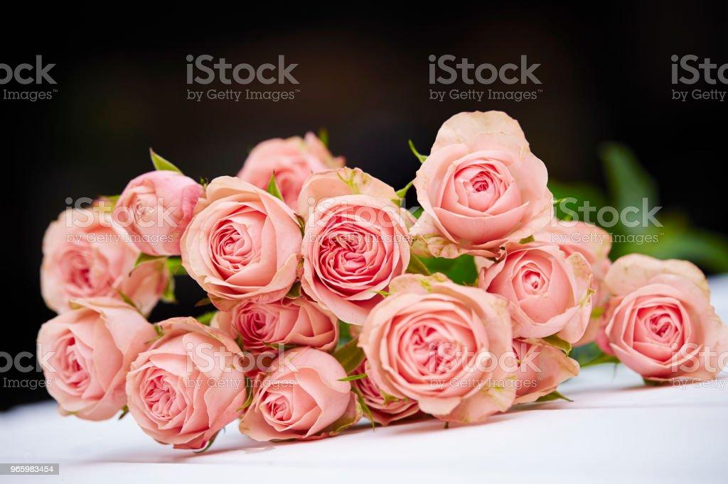 Rozen - Royalty-free Bloem - Plant Stockfoto