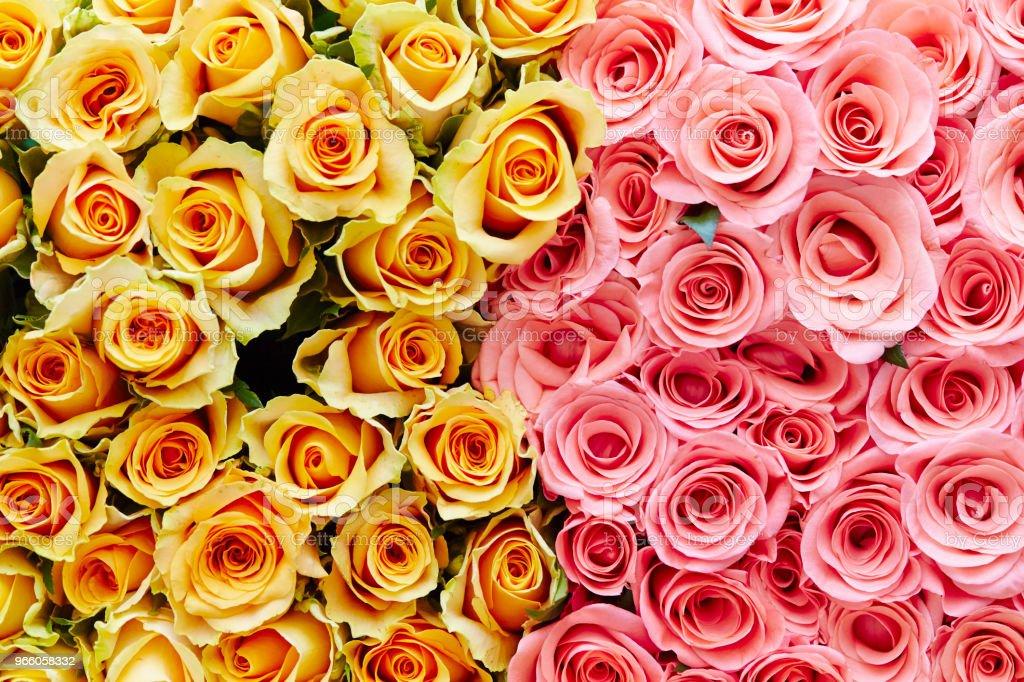 Rosen - Lizenzfrei Baumblüte Stock-Foto