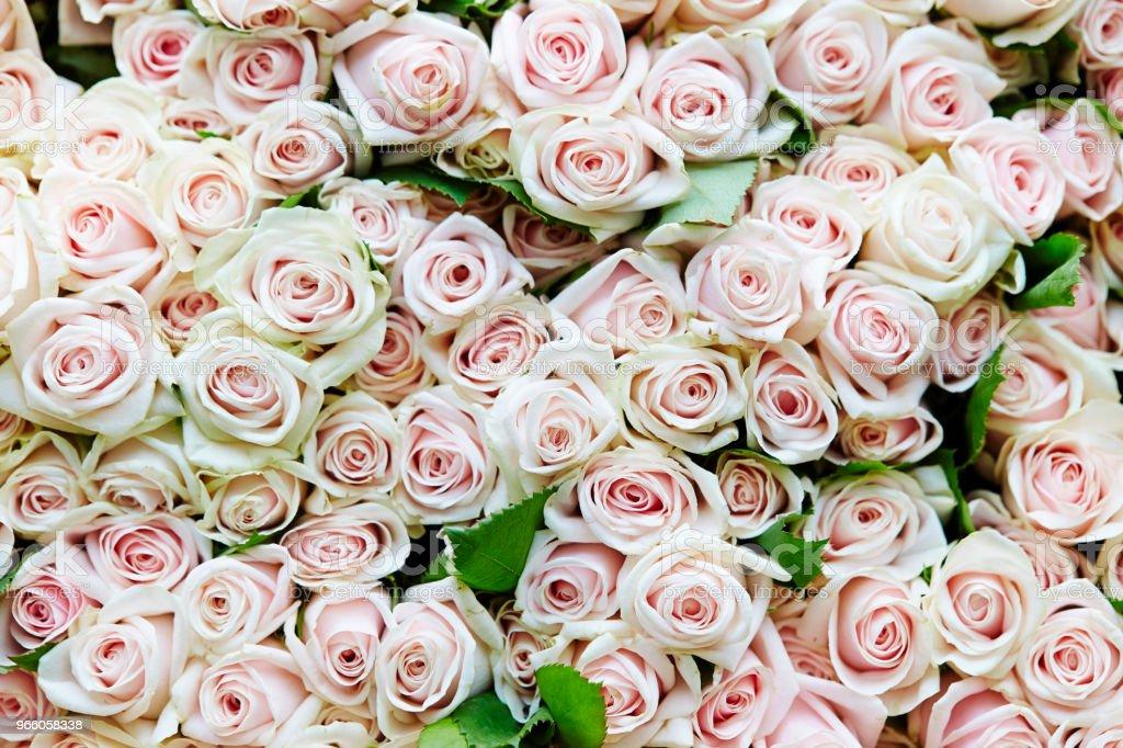 Rosor - Royaltyfri Bildbakgrund Bildbanksbilder