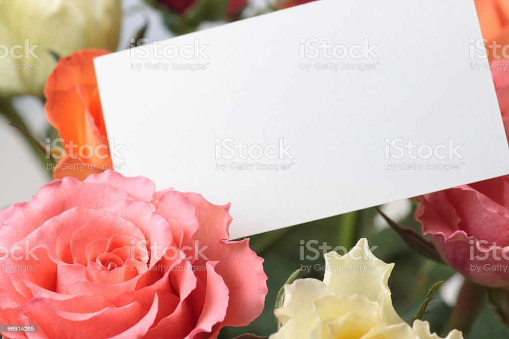 roses with an empty card royalty-free stock photo