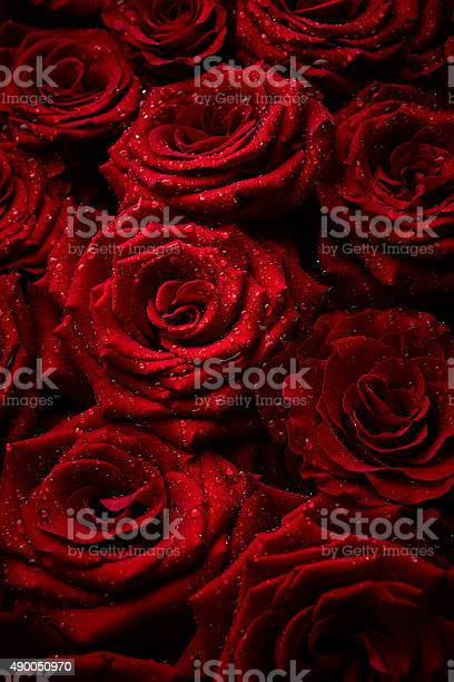 Roses with drops of water picture id490050970?b=1&k=6&m=490050970&s=612x612&h=zbpp7lgv ioksmhirtcdy7 ogfuxyjhu xvn0ulmmac=