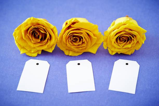 Roses with tags picture id1132437441?b=1&k=6&m=1132437441&s=612x612&w=0&h=9ncuiil7ydrbxpjjp225db8xc72zbwj3m2ew 5dwybk=