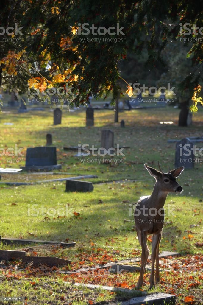 Ross Bay Cemetery stock photo