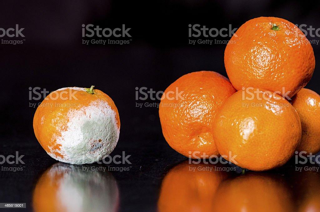rot orange stock photo
