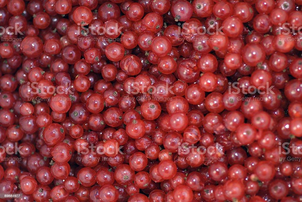 Rote Johannisbeeren (ribes rubrum) royalty-free stock photo