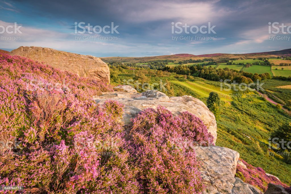 Rothbury Terraces Heather and Crags stock photo