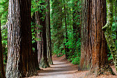The Rotorua Redwoods Forest is a popular place for locals and tourists. It is very central to town and has many walking trails with varying length to suit all abilities.