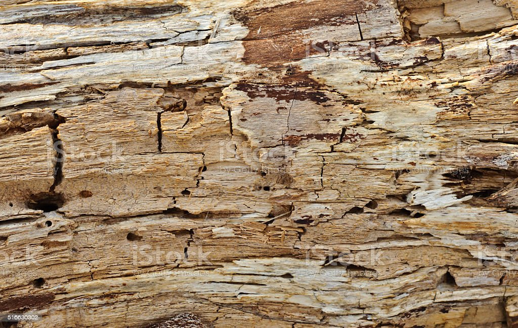 rotted wood surface texture stock photo