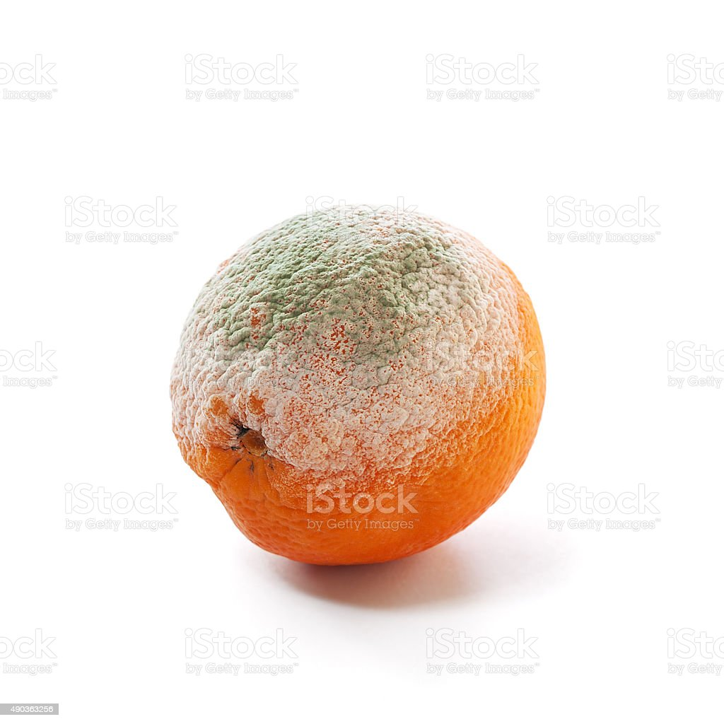 rotten and moldy orange stock photo