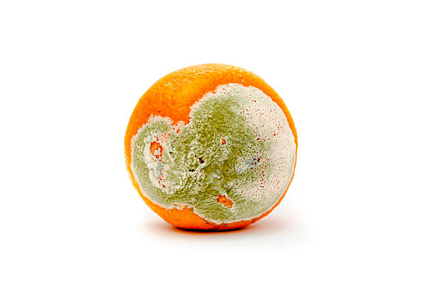 rotten and moldy orange rotten and moldy orange rotting stock pictures, royalty-free photos & images