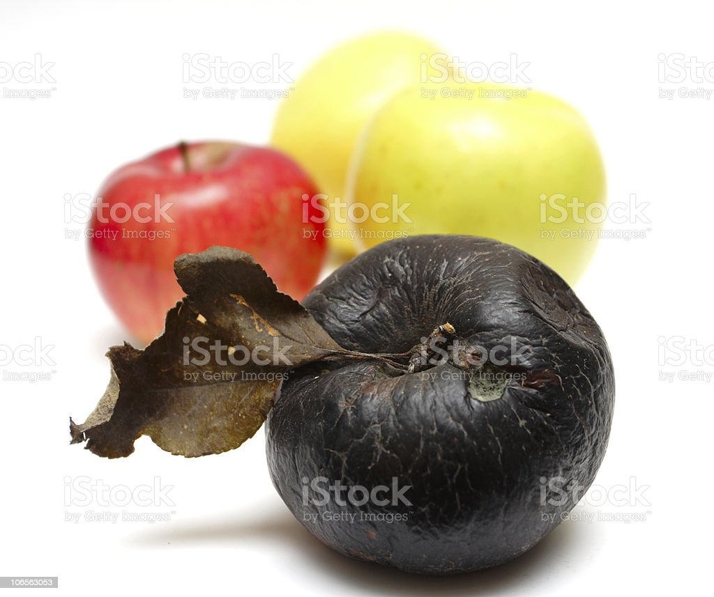 rotten apple at the row of fresh apples royalty-free stock photo