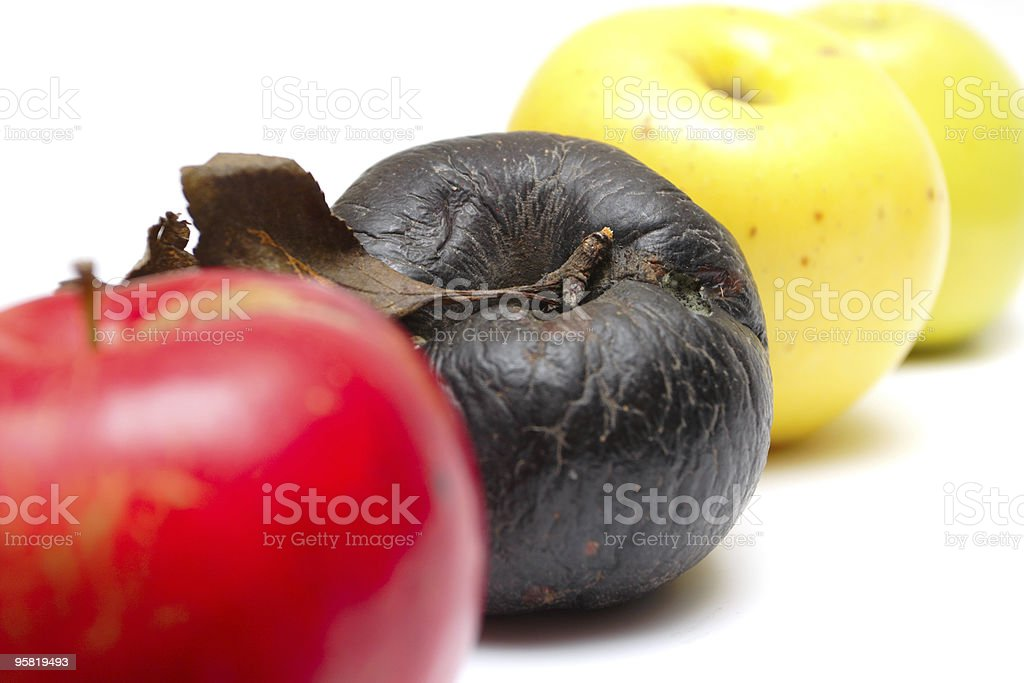 rotten apple at the row of fresh apples stock photo