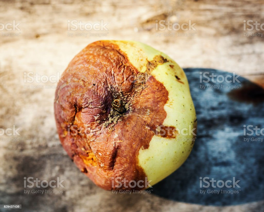 Rotten apple in wooden background stock photo