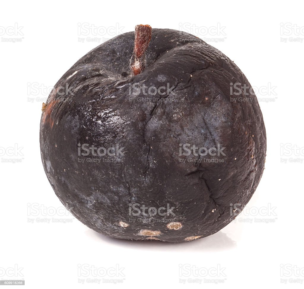 rotten apple isolated on a white background stock photo