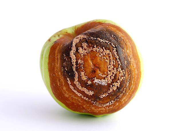 Rotten apple – Foto