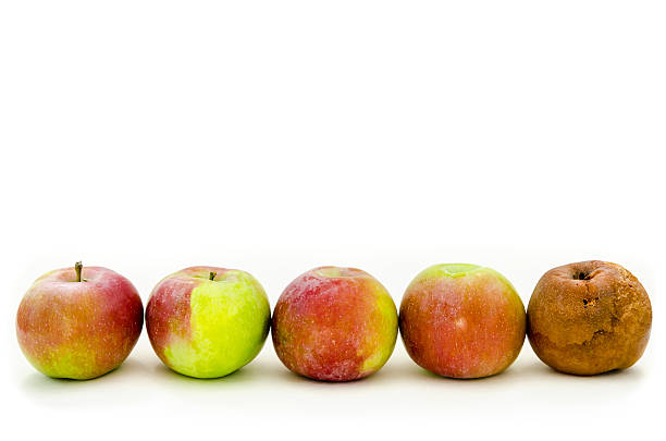 Premise Indicator Words: Best Rotten Apple Stock Photos, Pictures & Royalty-Free