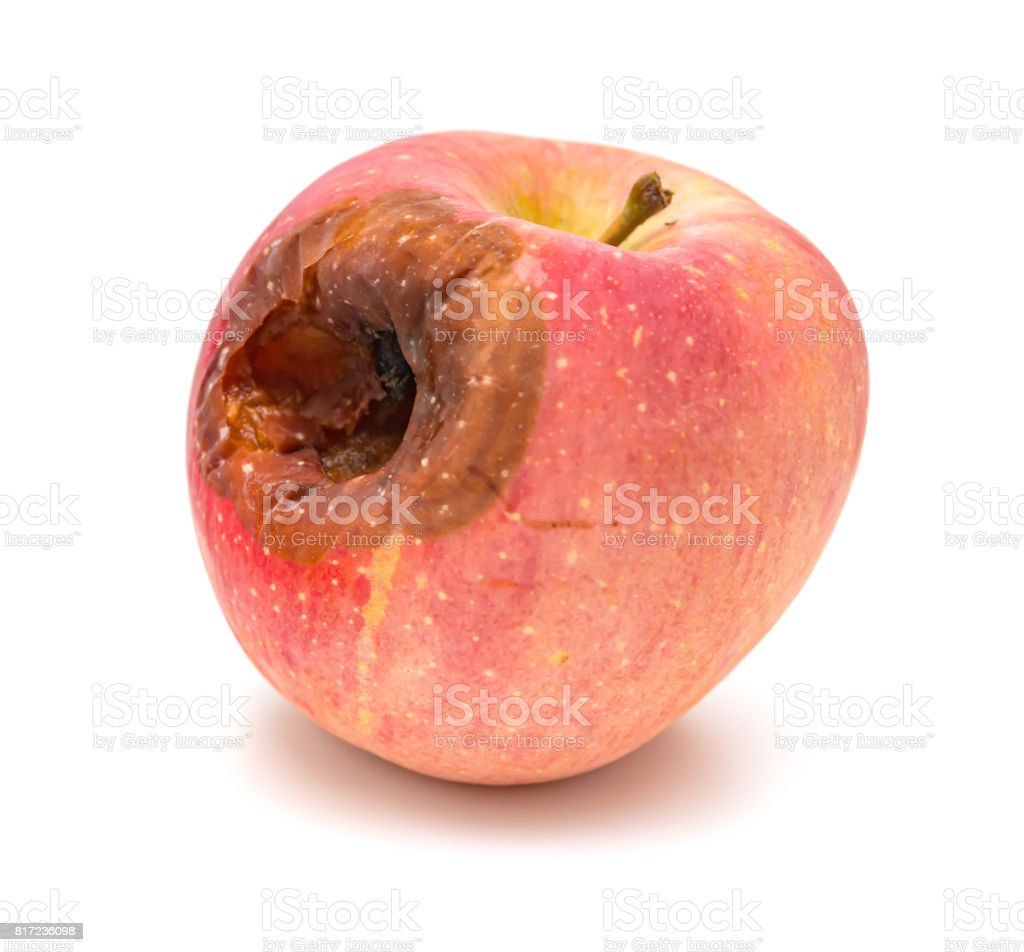 rotten apple with a big hole on white background stock photo