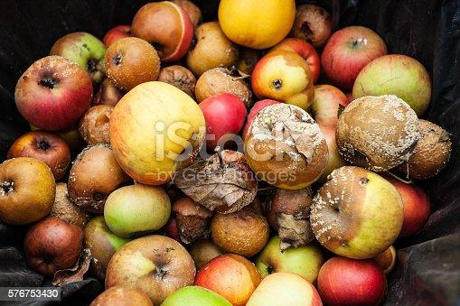 Rotten apples in trash bin; closeup;