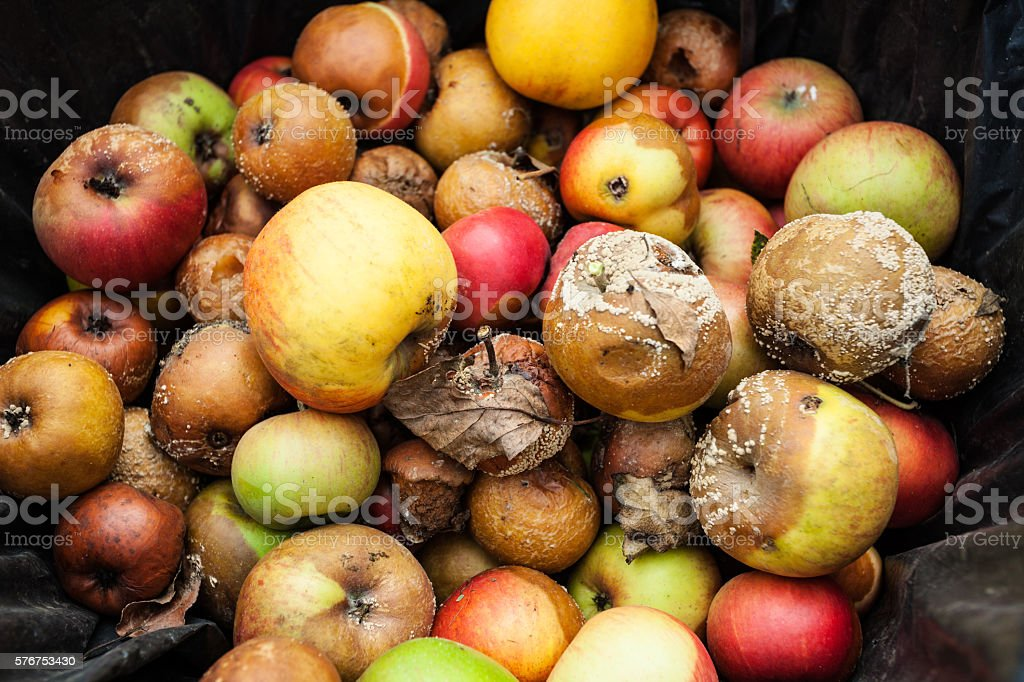 Rotten apples closeup stock photo