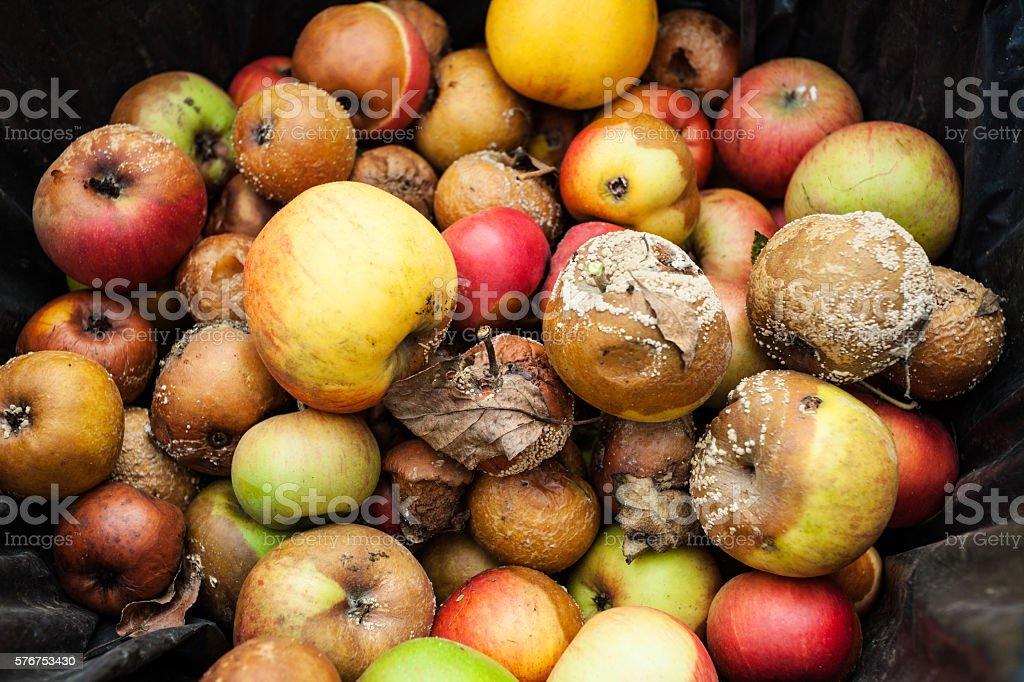 Rotten apples closeup stock photo