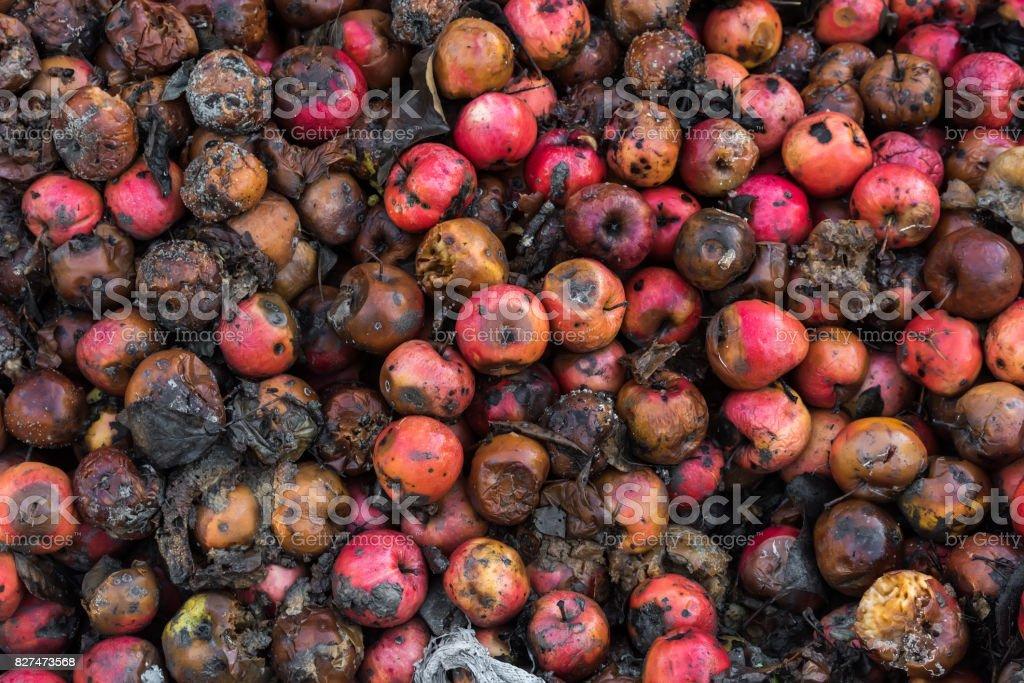 Rotten Äpfel – Foto