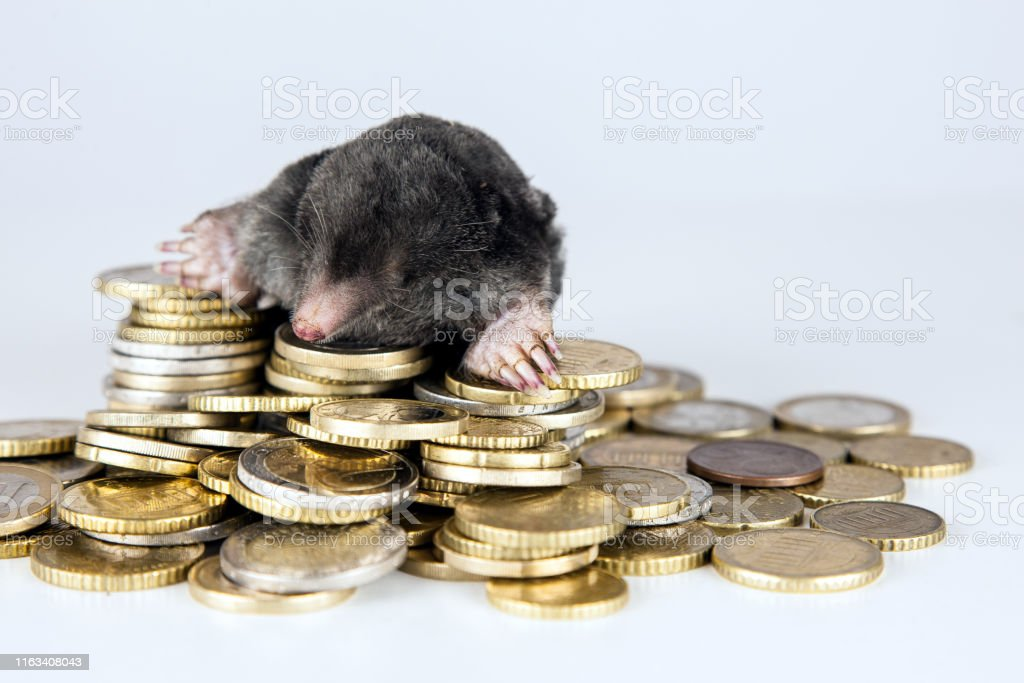 Rotten financial system - Royalty-free Business Stock Photo
