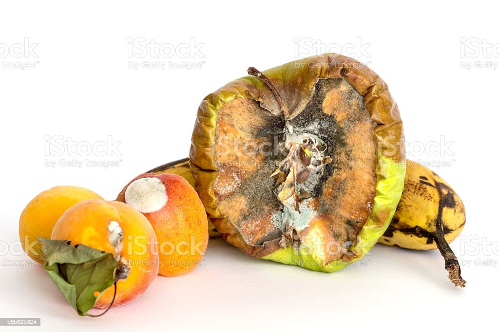 Rotten Fruits on white background / Fruit rot fungi / Composting fruits stock photo