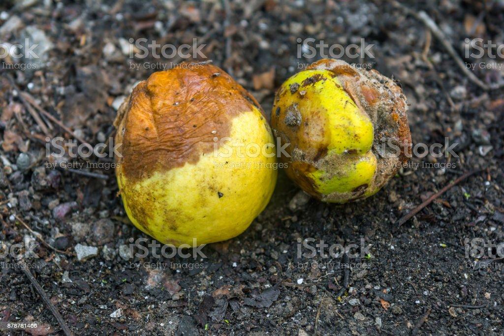 Rotten fruits stock photo