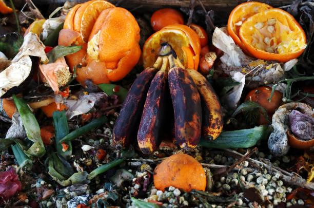 ruttna, gamla frukt och grönsaker. frukt och vegetabiliskt avfall på kompost - food waste bildbanksfoton och bilder