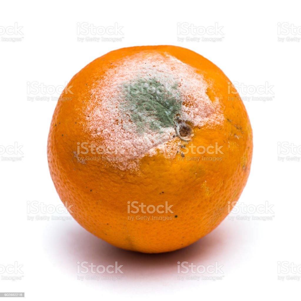 Verfaulte orange Frucht auf weißem Hintergrund – Foto