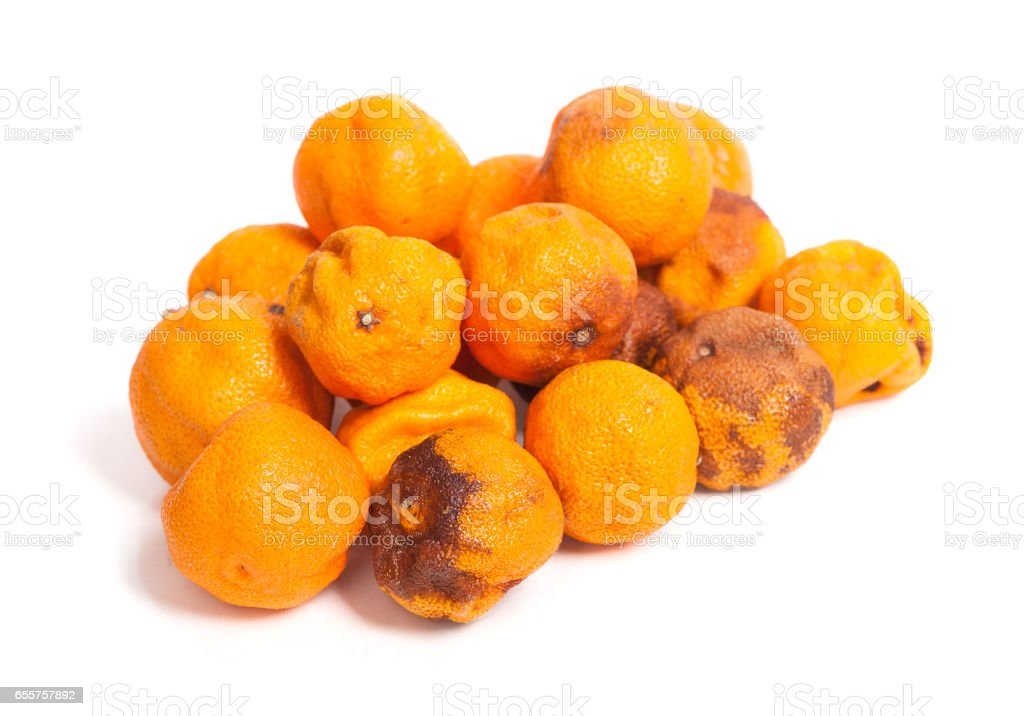 Rotten orange fruit stock photo