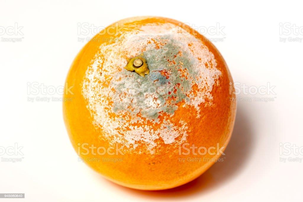 rotten orange isolated on the white background stock photo