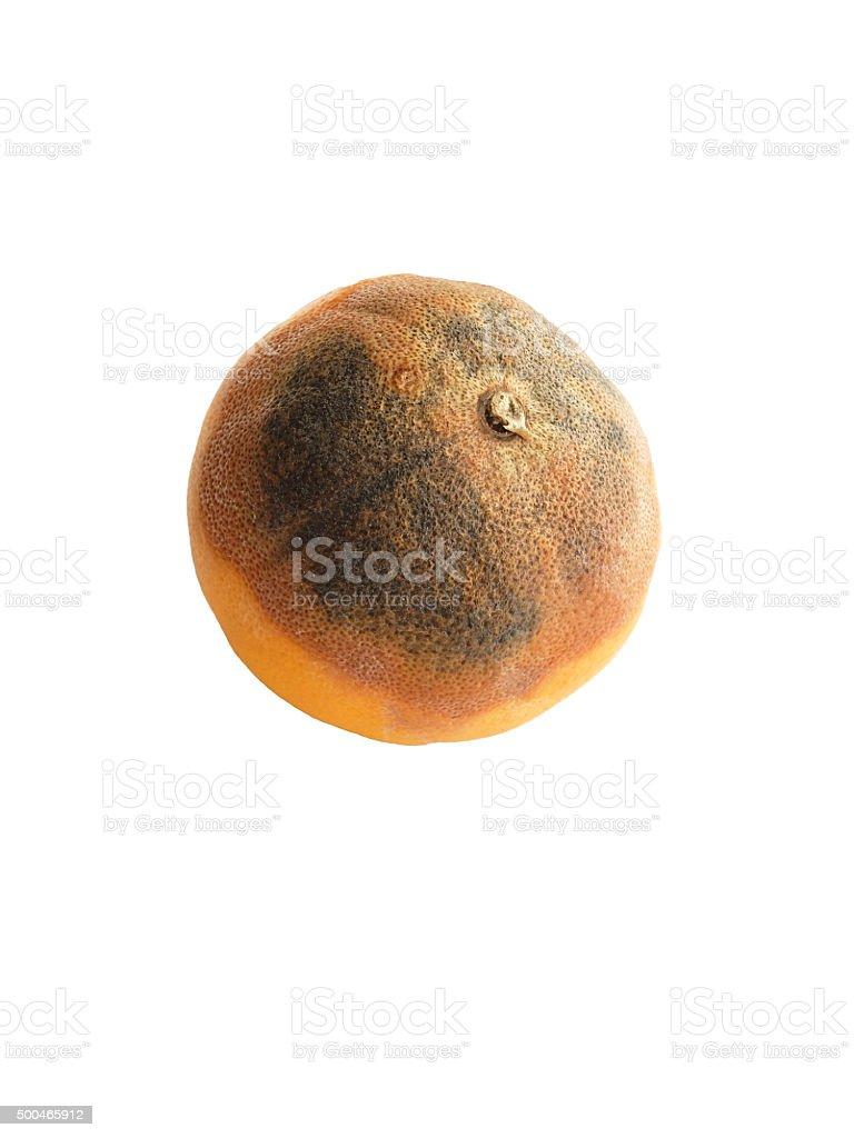 Rotten Orange isolated on white. stock photo
