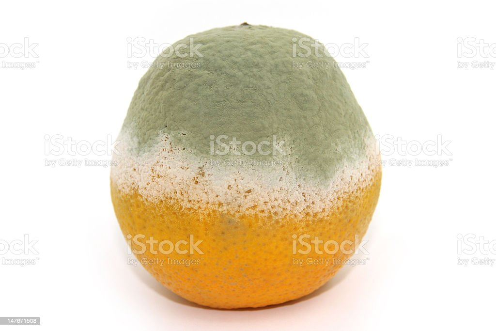 Rotten orange royalty-free stock photo