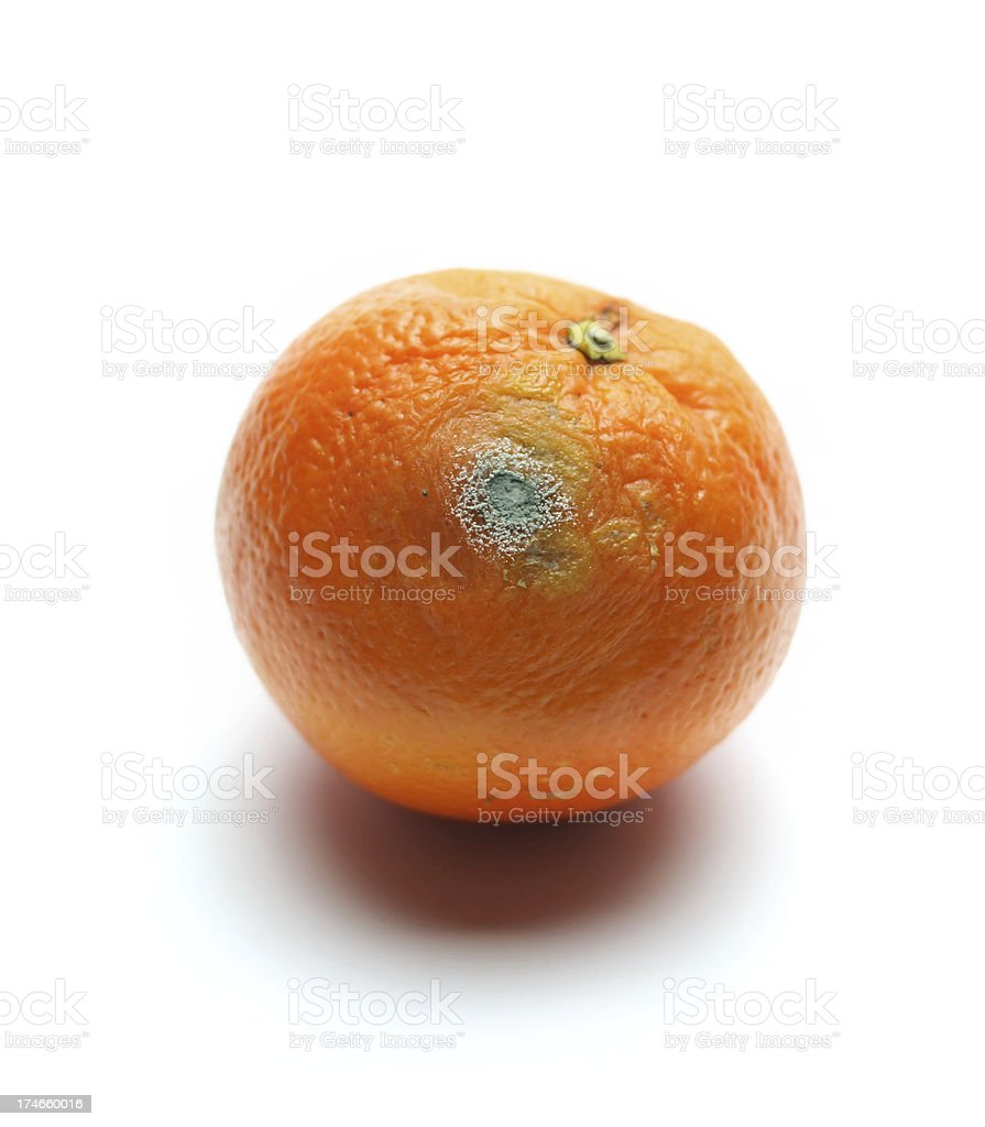 Rotten Orange royalty-free stock photo