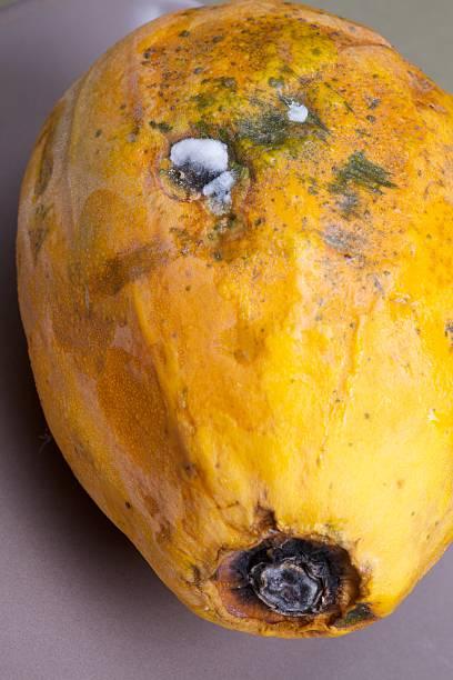 rotten papaya - abnehmen leicht gemacht stock-fotos und bilder