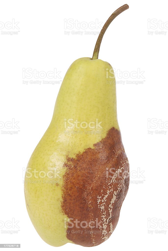 Rotten pear on white royalty-free stock photo