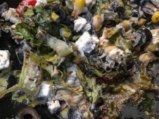 çürük salata bitki stok fotoğrafı