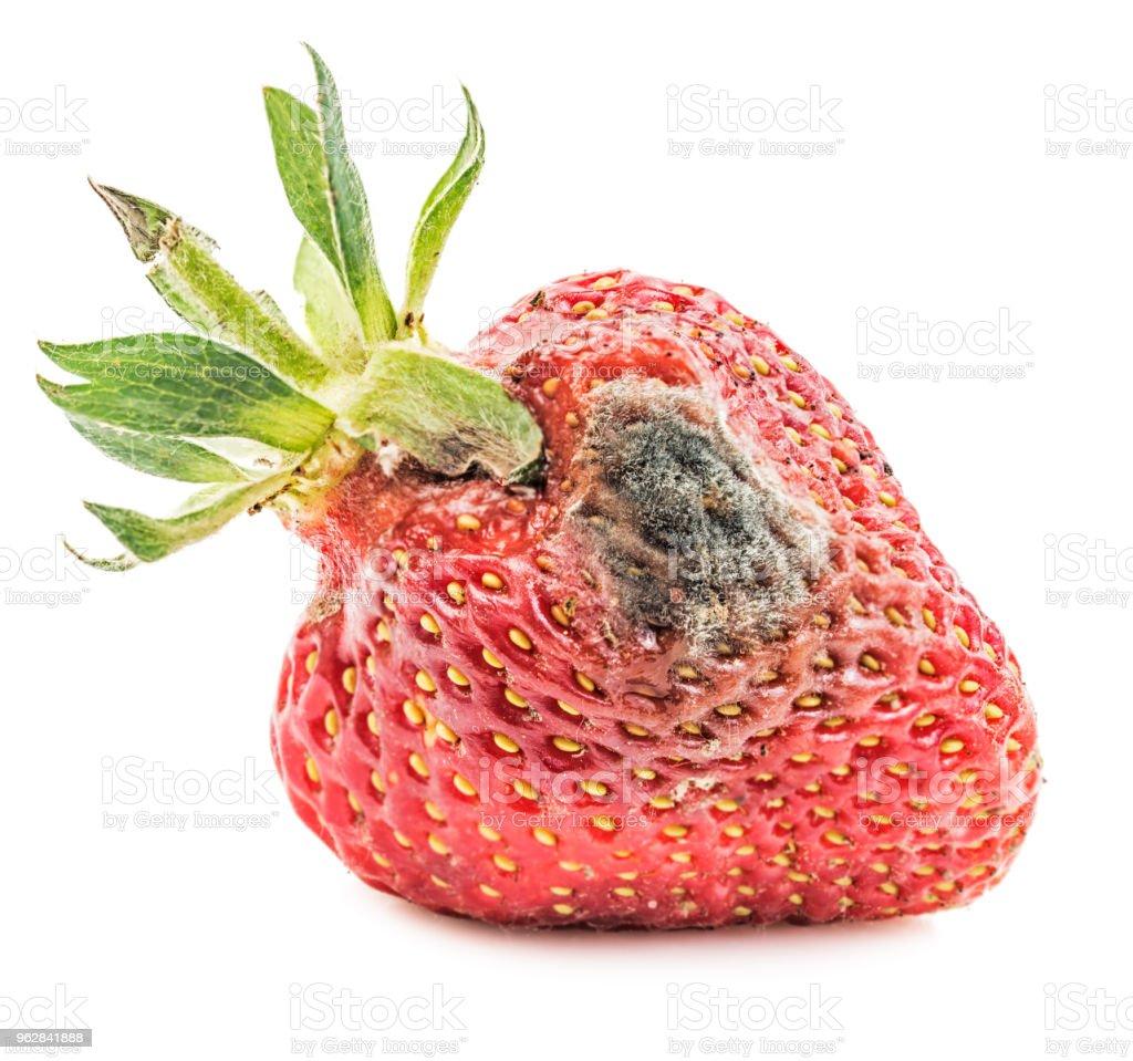 Rotten strawberry isolated stock photo