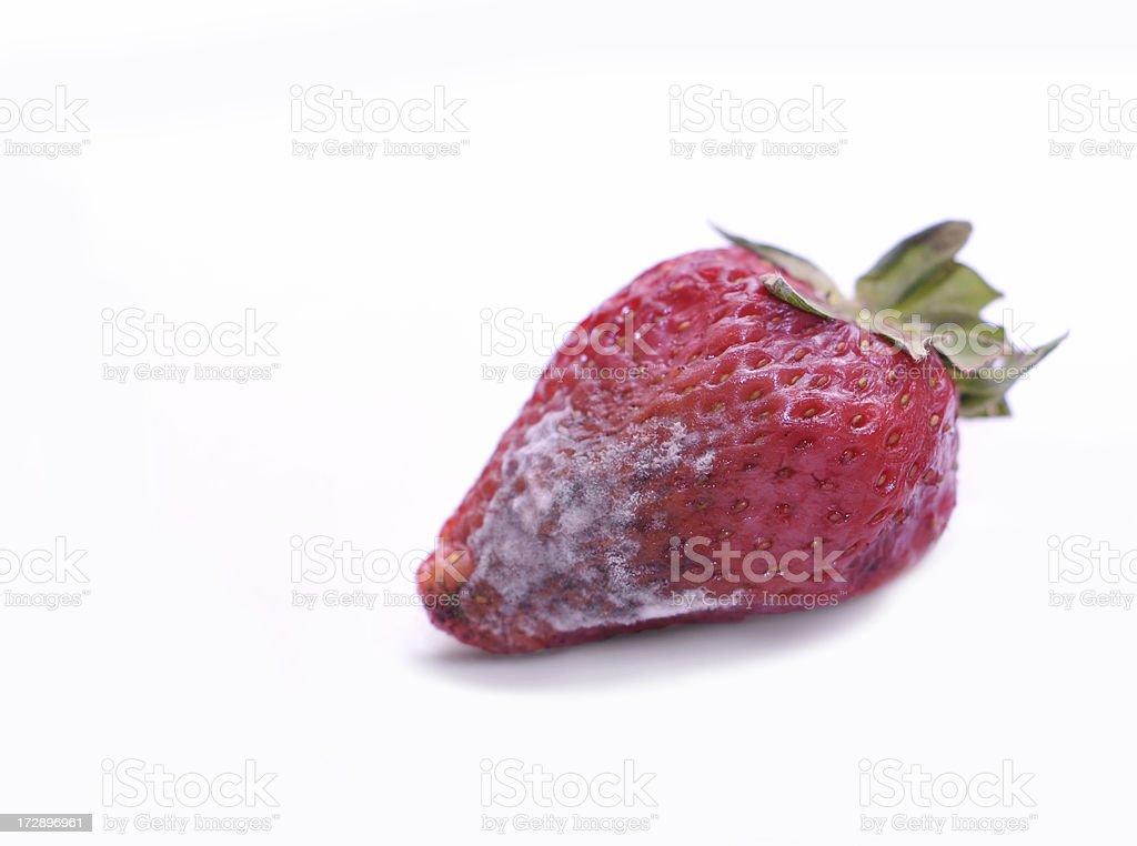rotten strawberry royalty-free stock photo